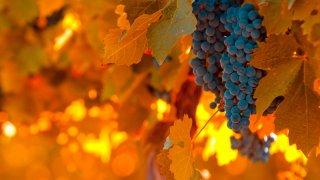 vin argentins - vignobles argentine - voyage terra argentina