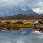 gauchos en patagonie