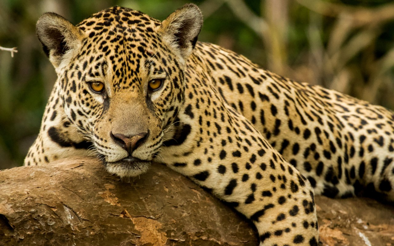jaguarete - terra argentina soutient la fundacion vida silvestre