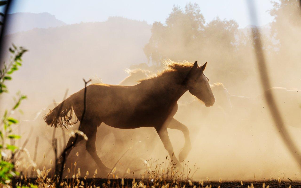 chevaux en amérique du sud