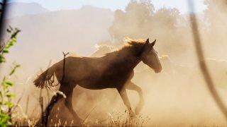 Balade à cheval en Patagonie, Argentine & Chili