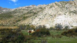 chevaux estancia sapucai