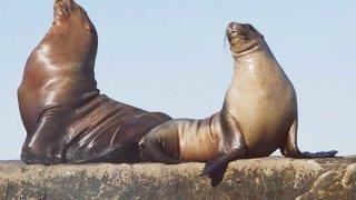lions de mer à la péninsule valdes - la patagonie en famille