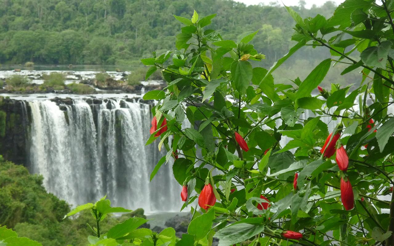 chutes d'iguazu - voyage argentine