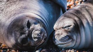 faune marine de patagonie argentine