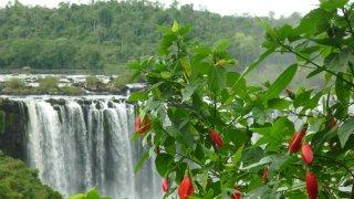 chutes iguazu - voyage argentine nature