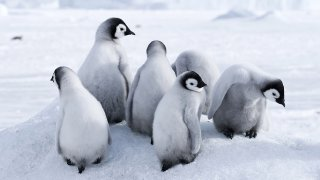 Croisière Antarctique à bord du World Explorer