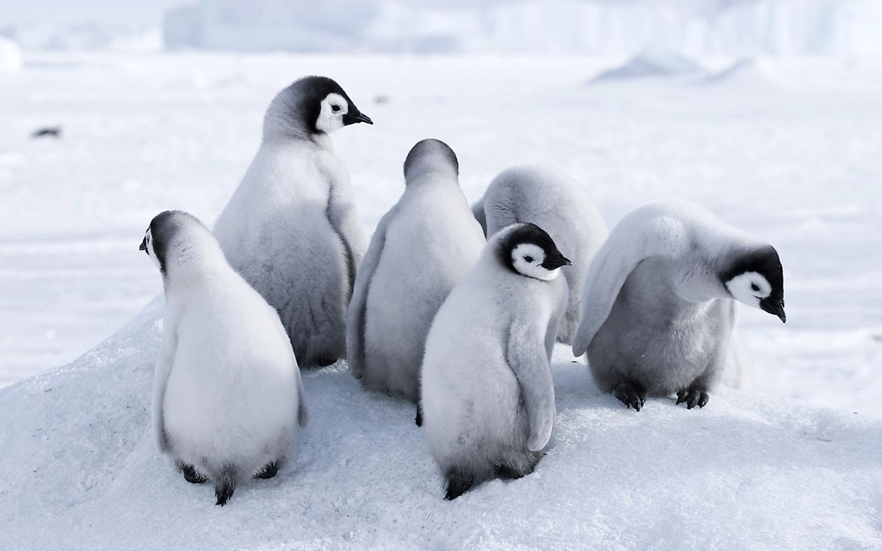 croisière antarctique - voyage argentine - départ ushuaia - terra argentina