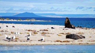 éléphants de mer - voyage patagonie - terra argentina