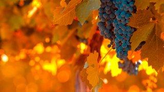 Les Vignobles argentins & chiliens