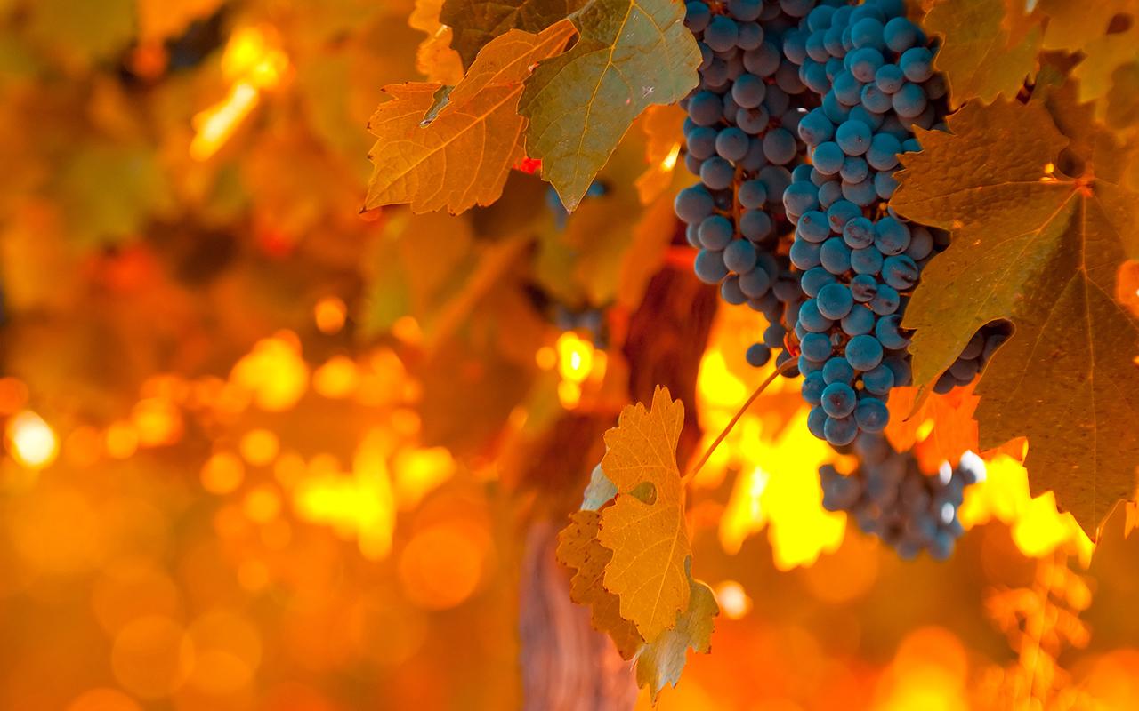 vignobles argentins et chiliens