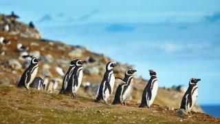 La Patagonie à contre-courant