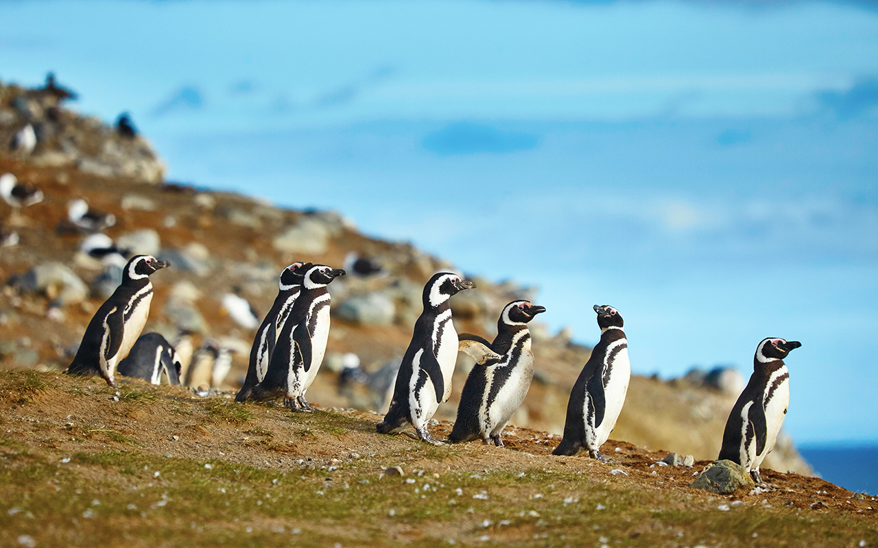 quand partir en patagonie - terra argentina agence de voyages