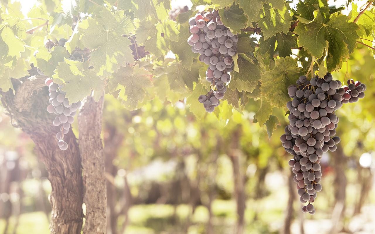 expériences insolites en argentine - vignes argentines - voyage sur mesure