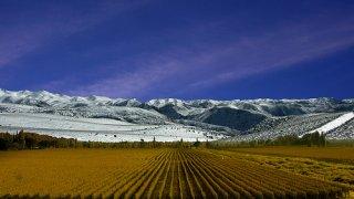 mendoza vignes - voyage terra argentina