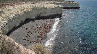 péninsule de valdes, patagonie argentine