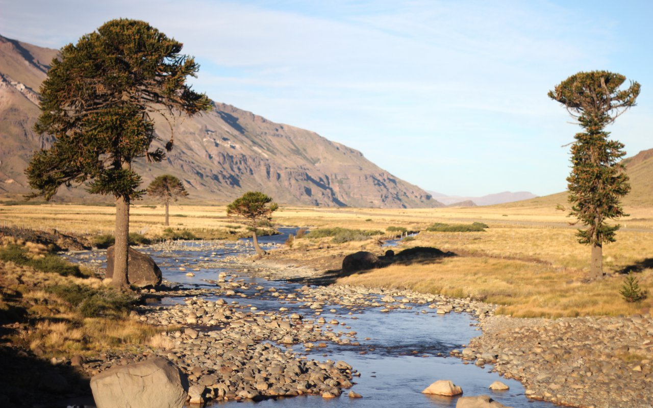 araucaria steppe région de bariloche