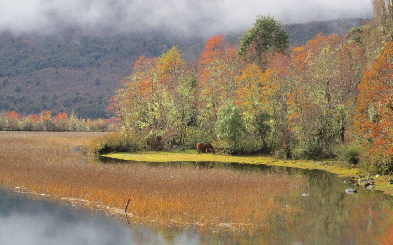 lac steffen bariloche automne