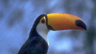 toucan - voyage argentine
