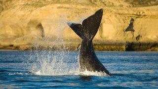 Puerto Piramides & la faune marine de la Patagonie argentine
