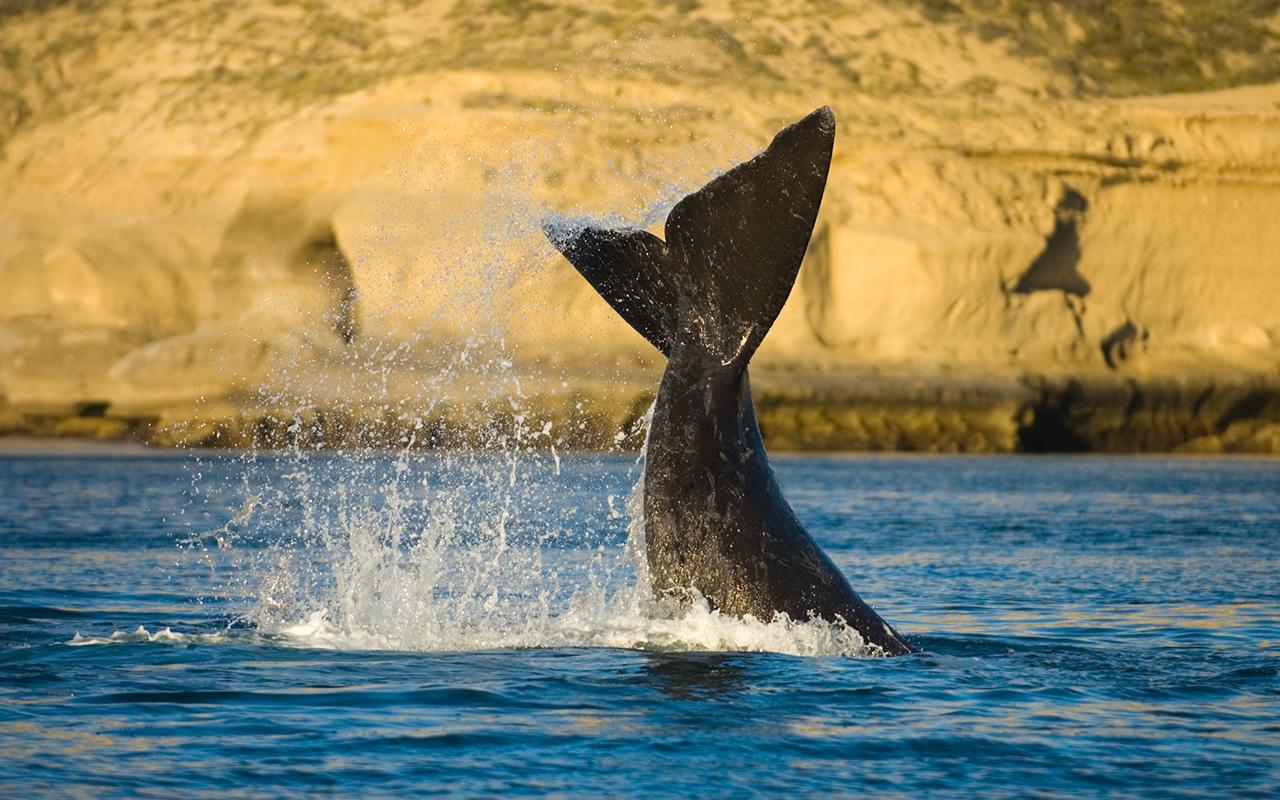 puerto piramides et la faune marine de patagonie argentine