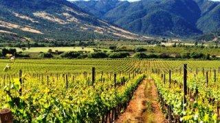 santa cruz - route des vins argentins et chiliens