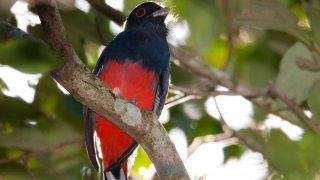 observation des oiseaux - surucua lodge