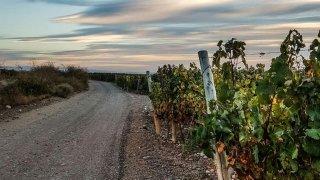 vignobles argentins et chiliens - voyage terra argentina