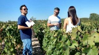vignobles argentins