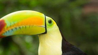 Voyage Argentine Nature : Chutes d'Iguazu & Forêt Tropicale